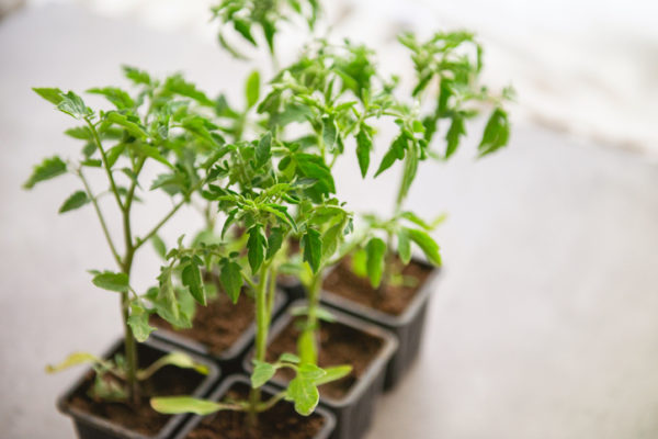 Life Science Centre – Grow your own lunch