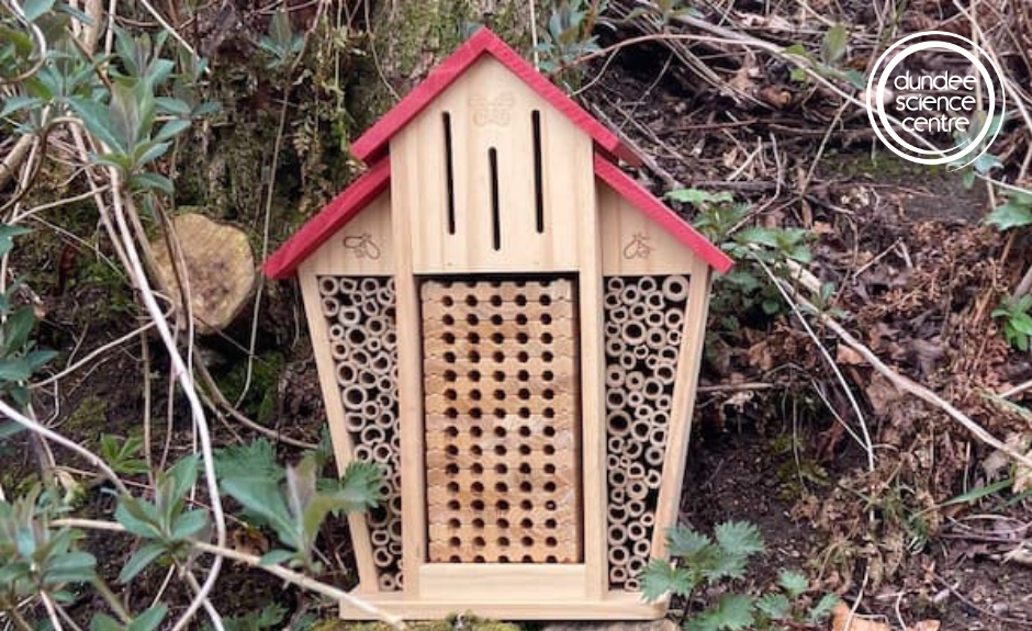 Endangered Species: Make An Insect Hotel – Dundee Science Centre