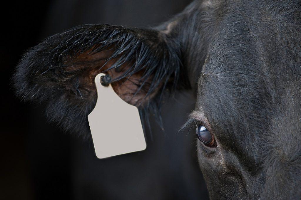 Our Broken Planet: Meat Me Halfway